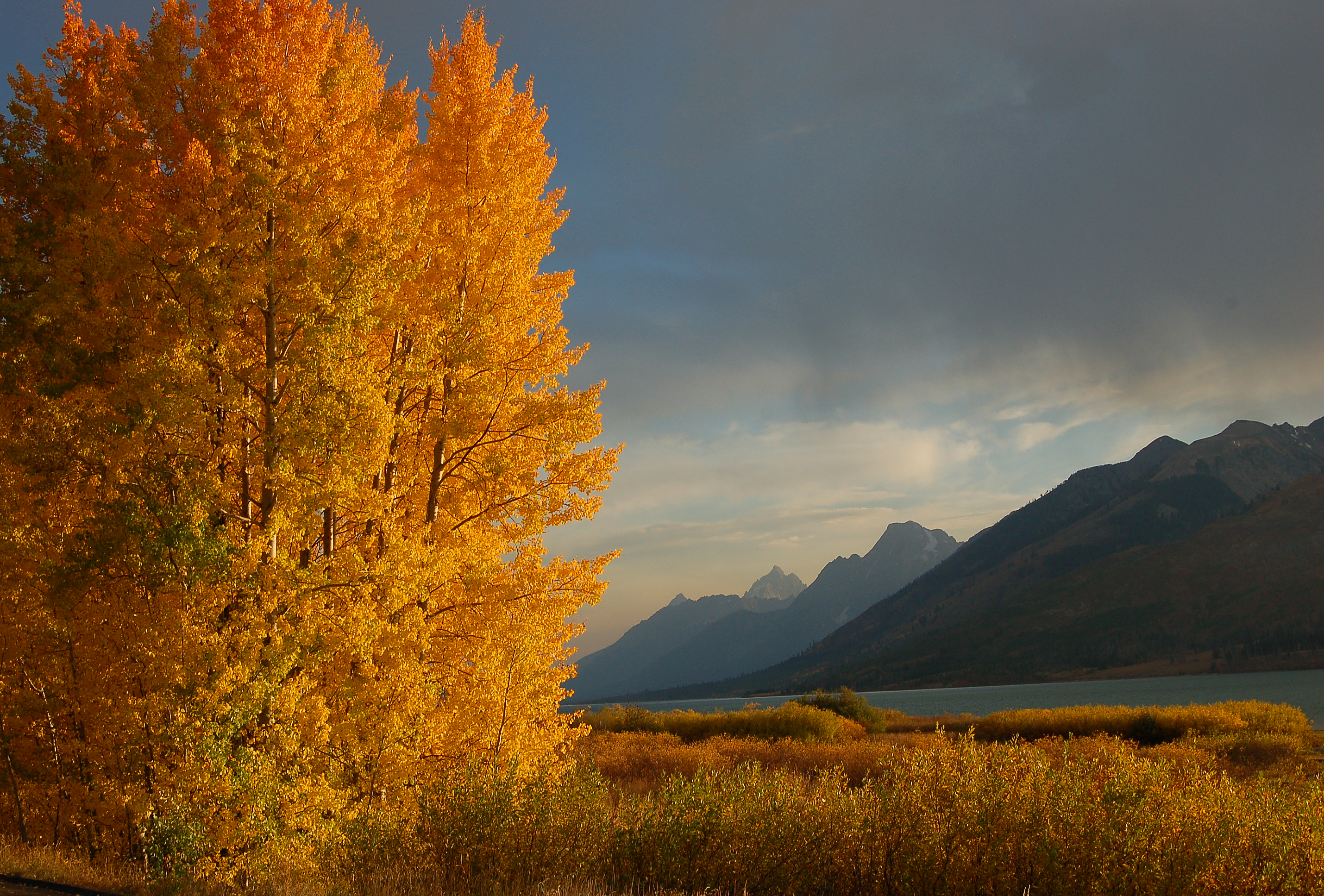 I shot this pic in the Grand Tetons. We just came around a corner right as the sun was setting, and the Aspens were in peak color - only had a couple of minutes to get the shot with the sun setting - it is all about the moments!