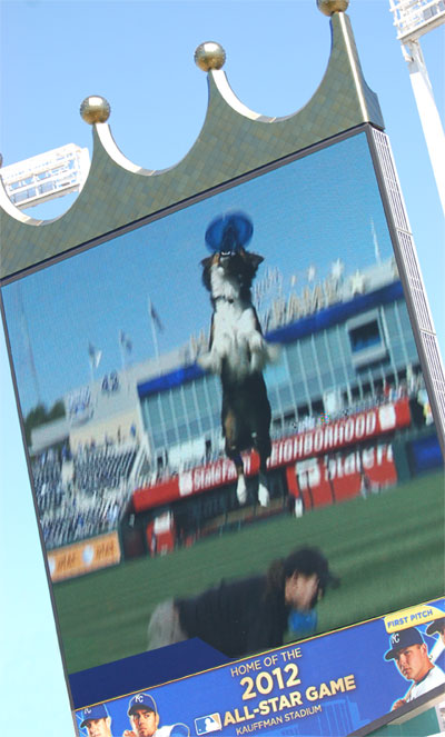 One of the benefits of performing for professional sports teams is a 50 foot tall Towser on the Jumbo Tron. :o)