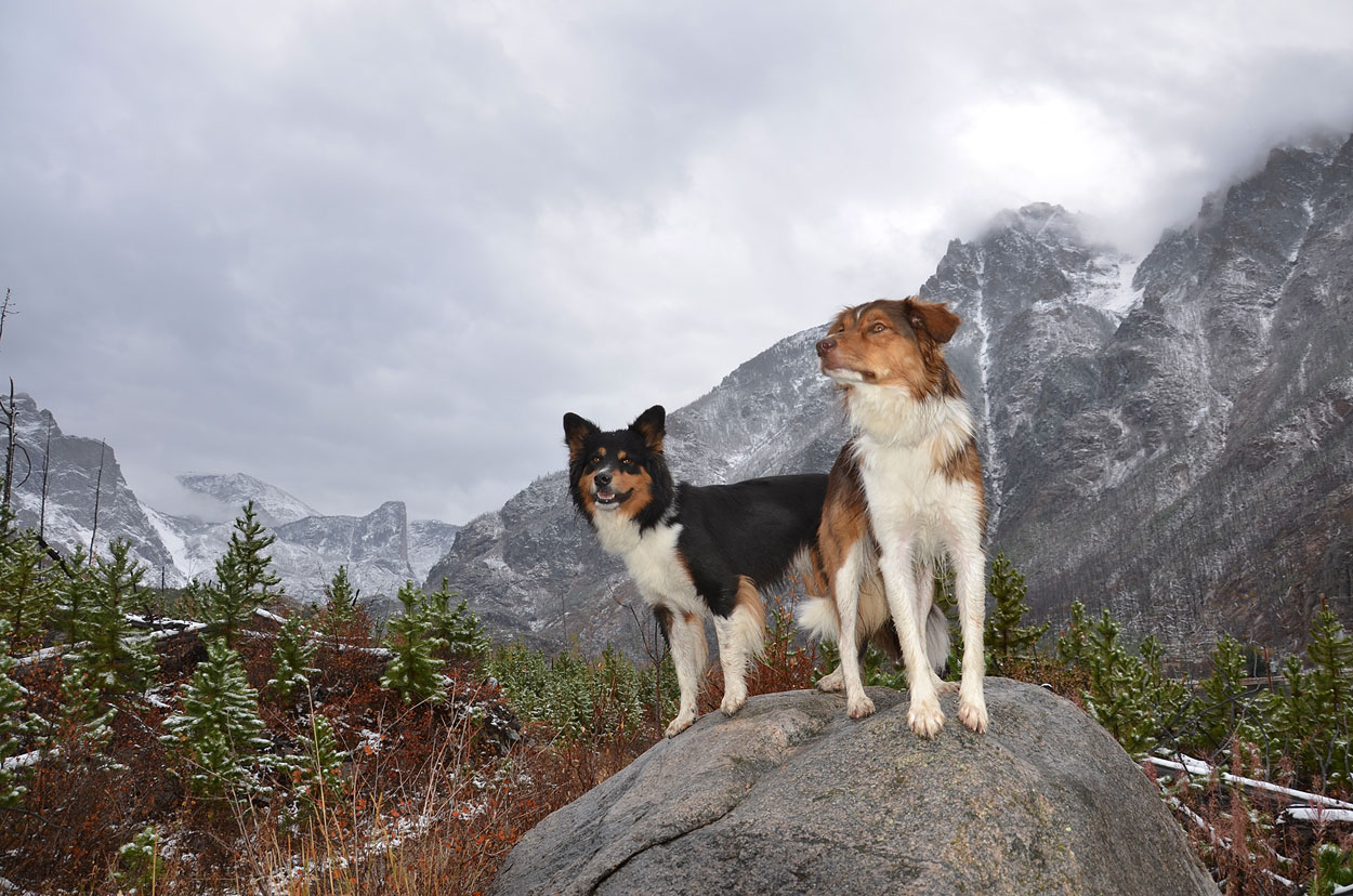 "This could be in the ""Disc Dogs"" album... cause these are my disc dogs - but at this particular time they were miles from discs on a trail in Montana. I love this picture as it looks like a museum setting! ""See these dogs in their native habitat""! :o)"